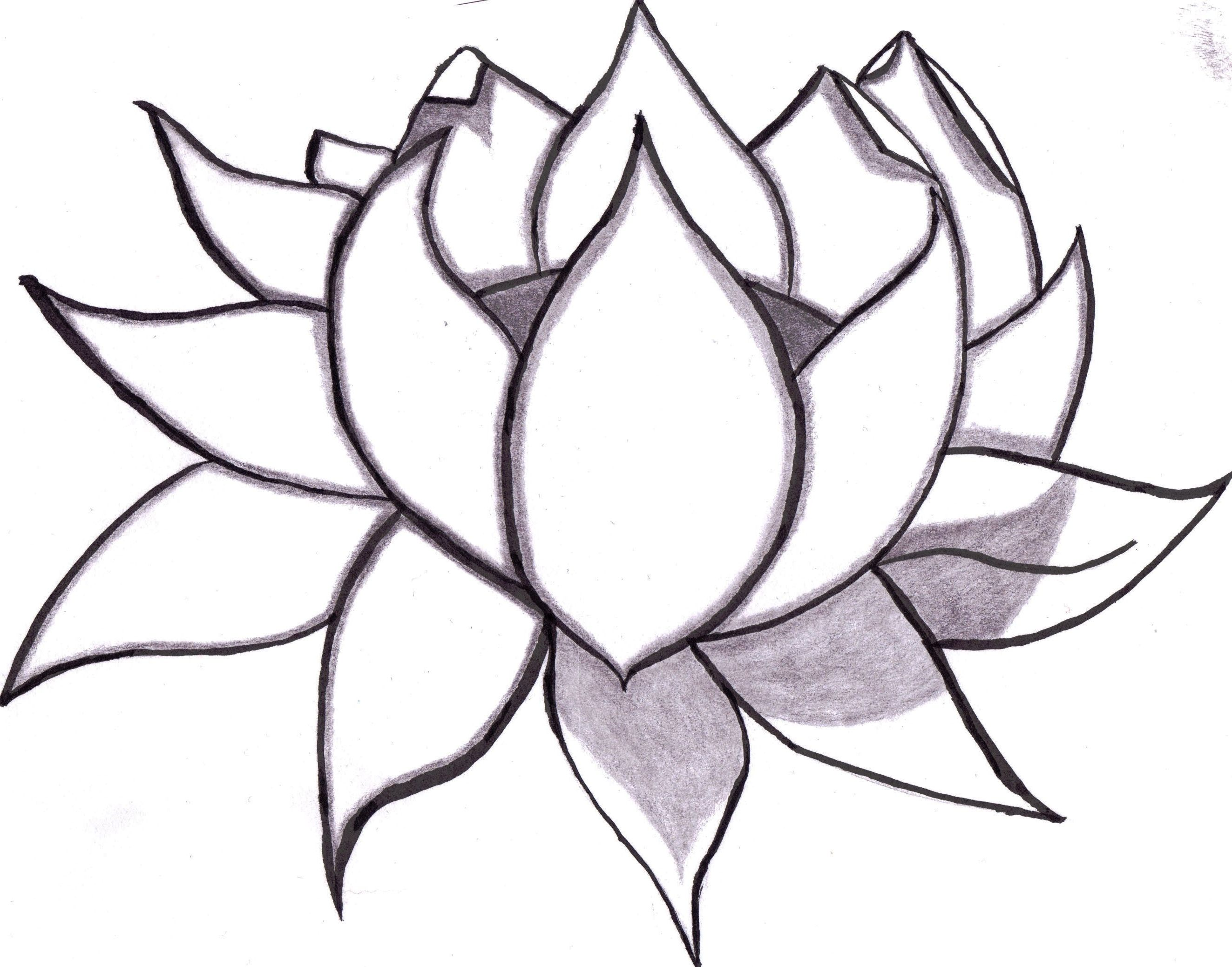 2646x2077 Lotus Drawing Step