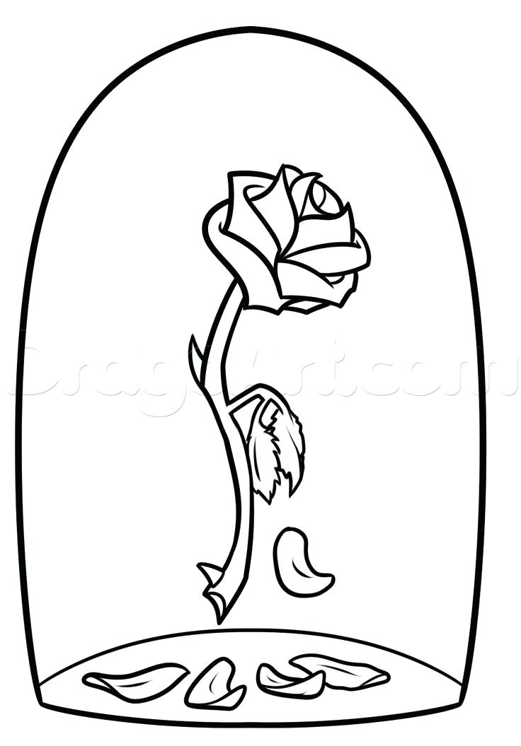 736x1055 Drawing Of A Rose Step