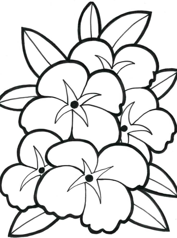 736x985 Easy Hawaiian Flowers To Draw Easy Flower Drawings Flower Drawing