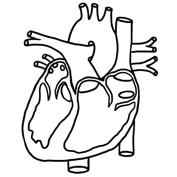 600x600 heart anatomy coloring pages heart diagram coloring sheet anatomy