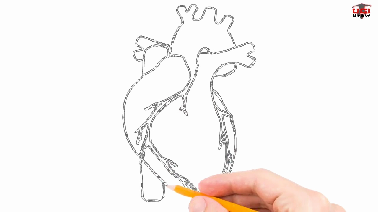 Easy Human Heart Drawing | Free download on ClipArtMag