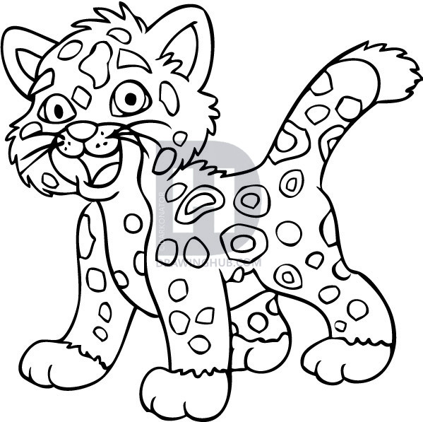 599x597 How To Draw Baby Jaguar From Go Diego, Step