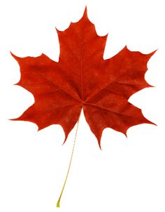 Easy Maple Leaf Drawing