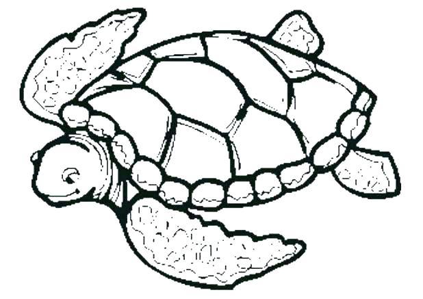 618x437 Turtle Drawings Godshelters