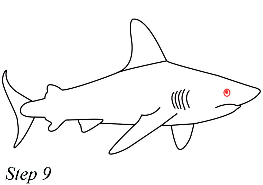 Easy Shark Drawing Free Download Best Easy Shark Drawing