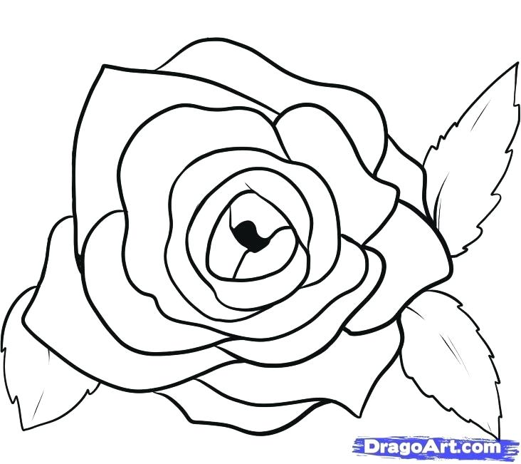 732x651 easy drawing roses how to draw roses tutorial drawing roses