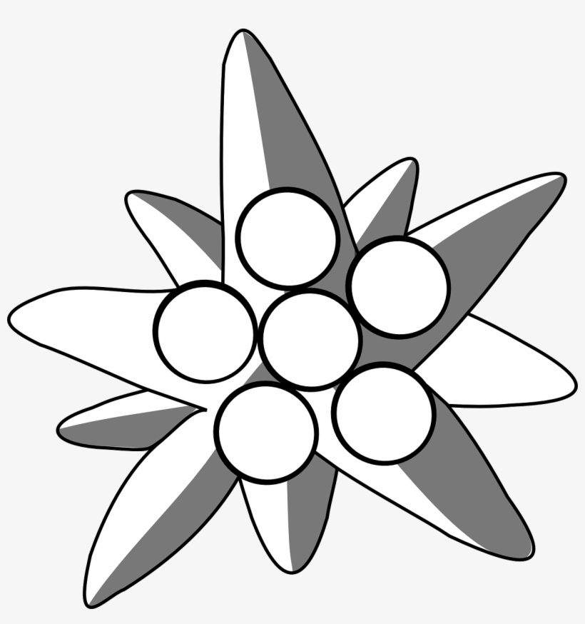 820x874 picture royalty free edelweiss drawing alpine flower