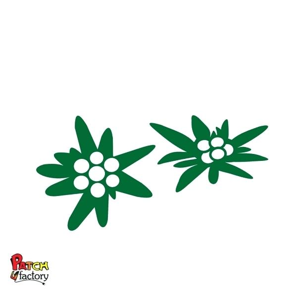 600x598 adelvice flower edelweiss flowers alps symbol vector illustration