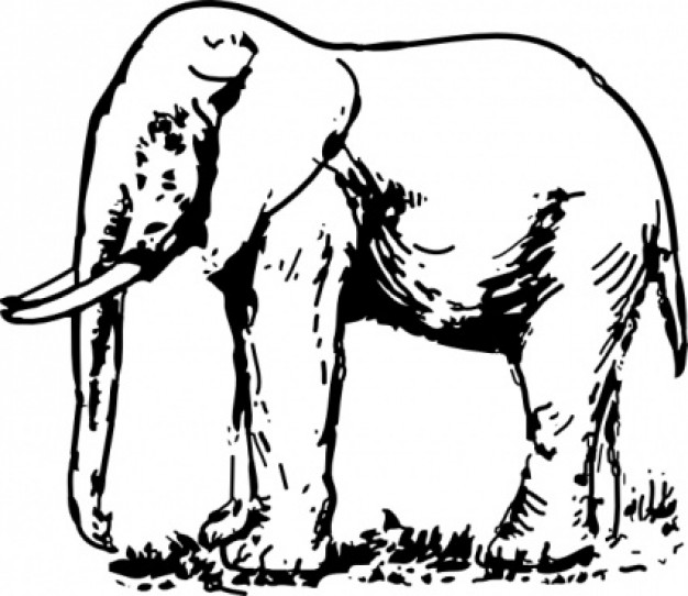 626x542 Elephant Drawing Clip Art In Side View Download Free Animal Vectors