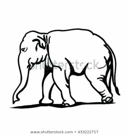 450x470 outline of a elephant outline elephant elephant outline clip art