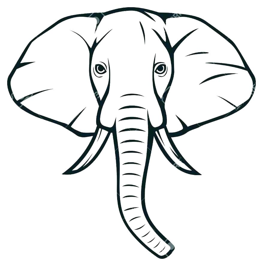 878x887 Simple Elephant Outline Drawing Template Baby