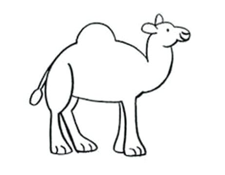 462x360 Easy Camel Drawing How To Draw A Elephant Drawings Camel Drawing