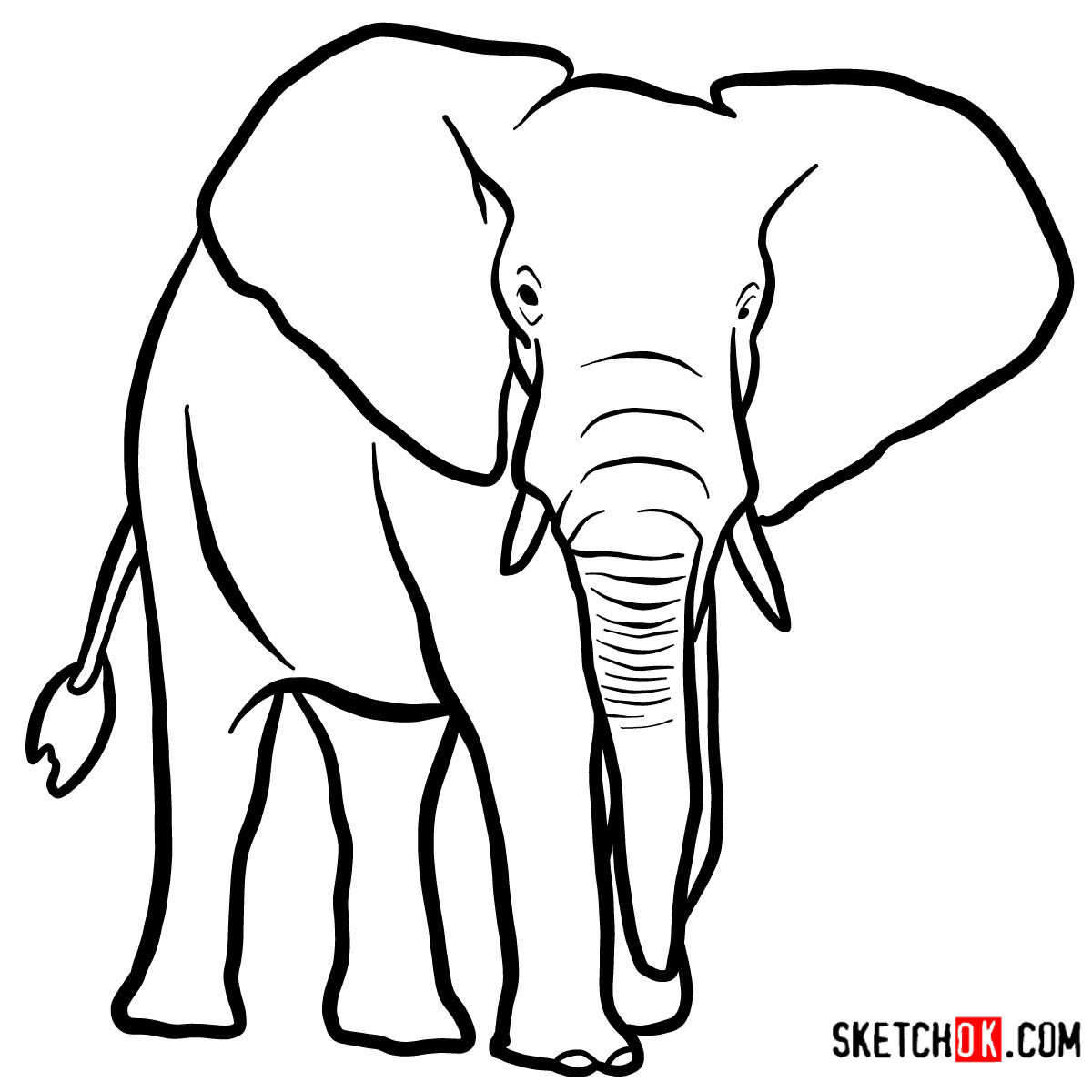 1200x1200 How To Draw An Elephant Front View Wild Animals