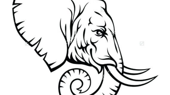 570x320 Elephant Head Drawing