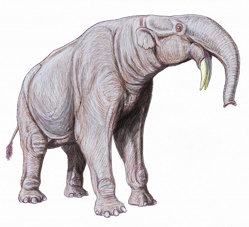 842x768 Nh Notes A Trunk And Tusk Challenged Fossil Elephant Naturalis