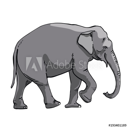 500x500 Indian Elephant Hand Drawing Sketch On White Background