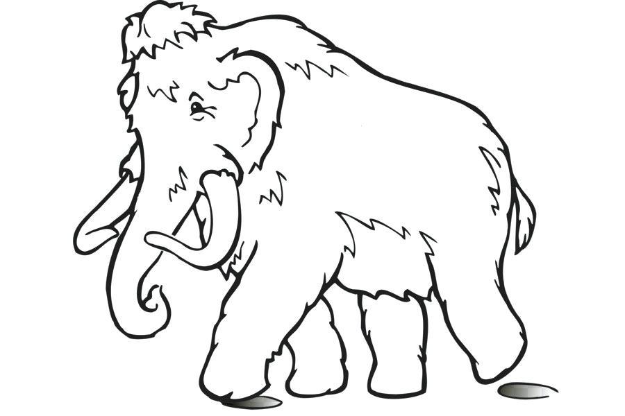 900x600 Mammoth Drawing