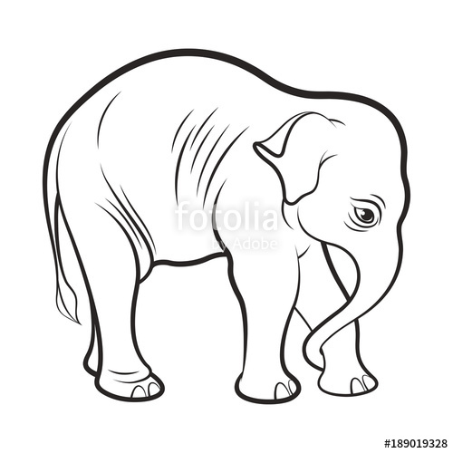 500x500 Black Outline Baby Elephant Vector Drawing Stock Image