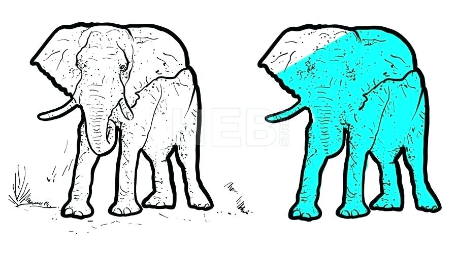 900x506 Elephant Outline Drawing
