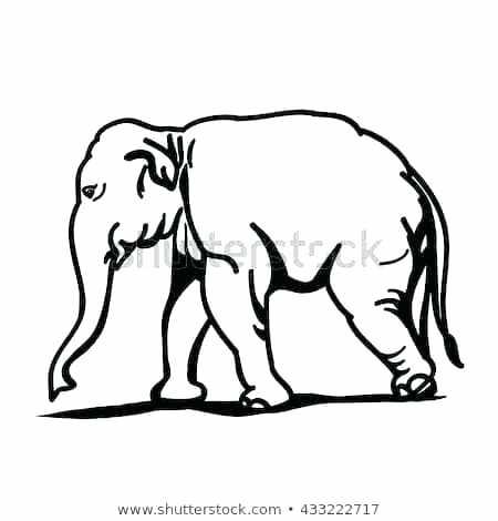 450x470 Elephant Drawing Outline Elephant Outline Elephant Outline