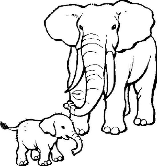 548x581 Elegant Elephant Pattern Coloring Pages