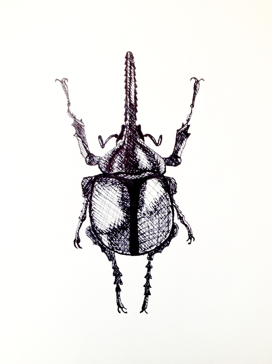 928x1240 Quinn Lysek Art Insect Drawing