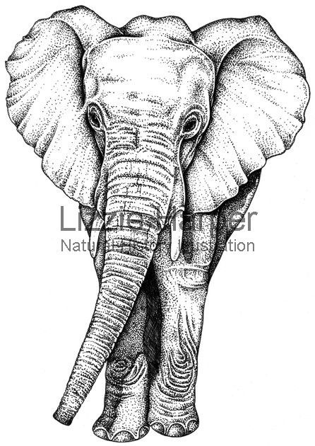 446x630 Elephant Illustration