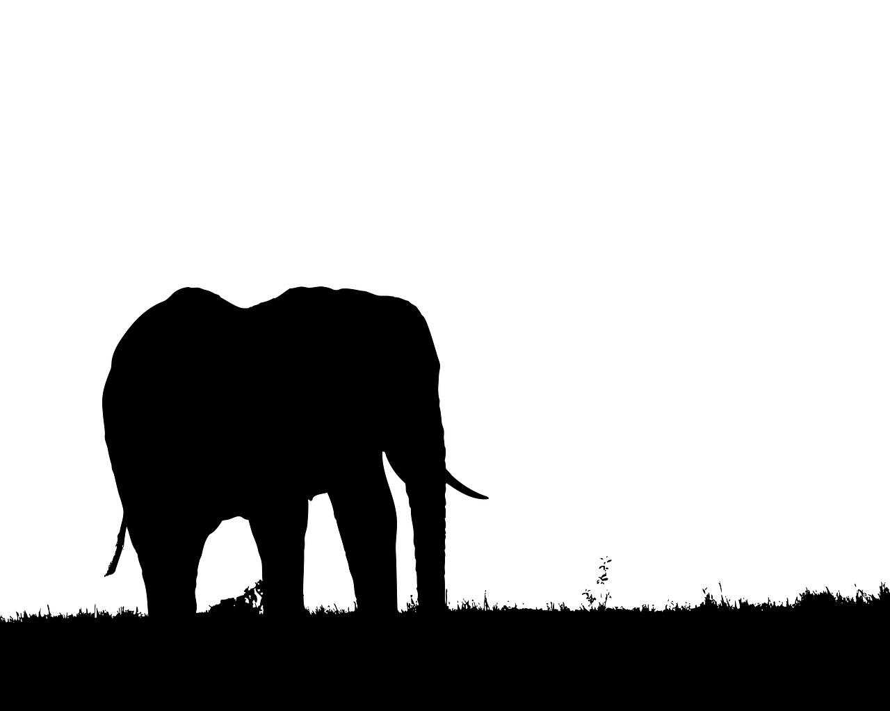 1280x1023 Elephant, Silhouette, Profile, Nature, Symbol