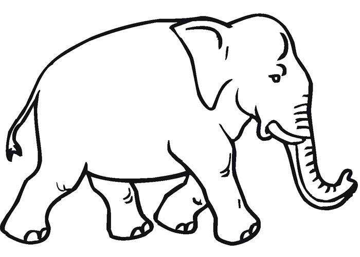700x500 Outline Of Elephant
