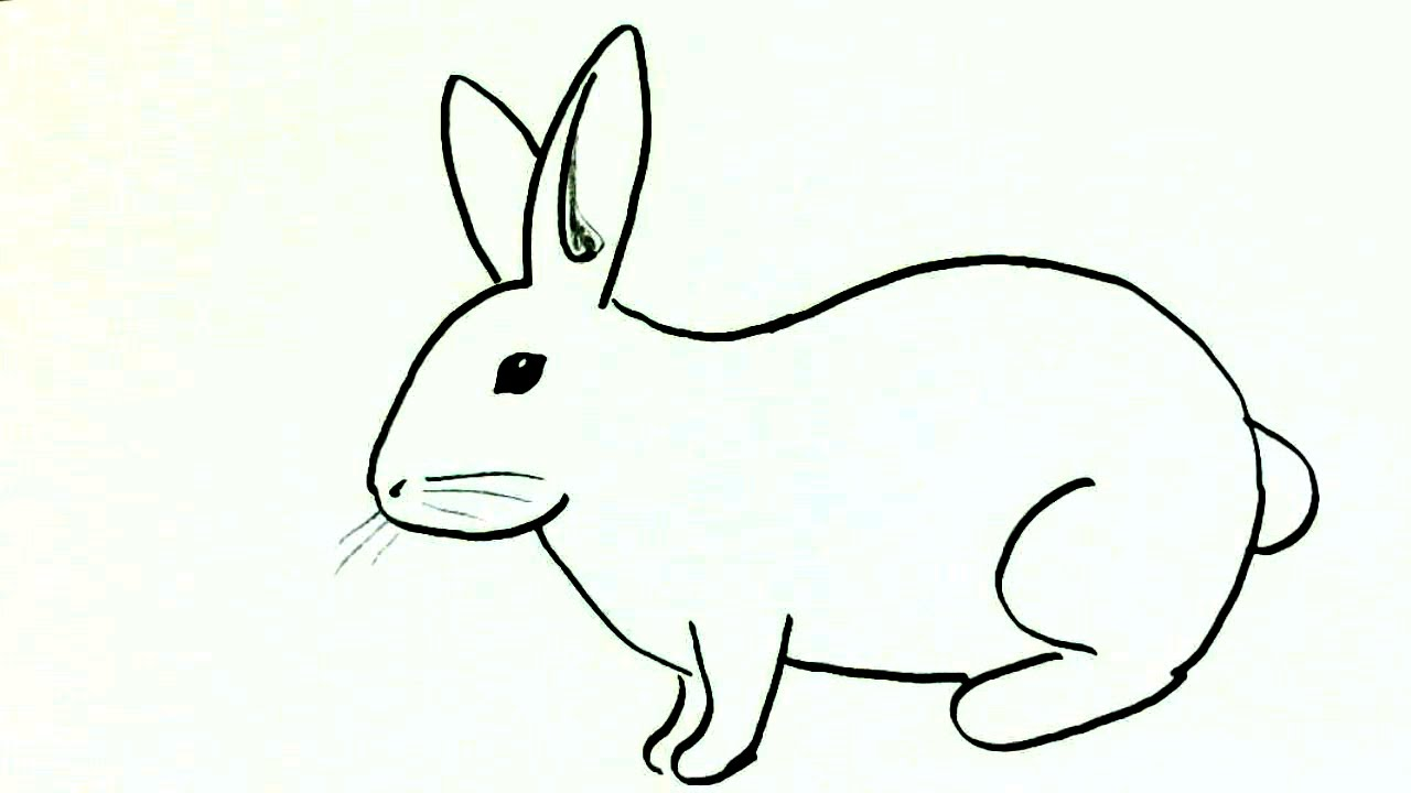 1280x720 How To Draw A Rabbit Or Bunny In Easy Steps For Children