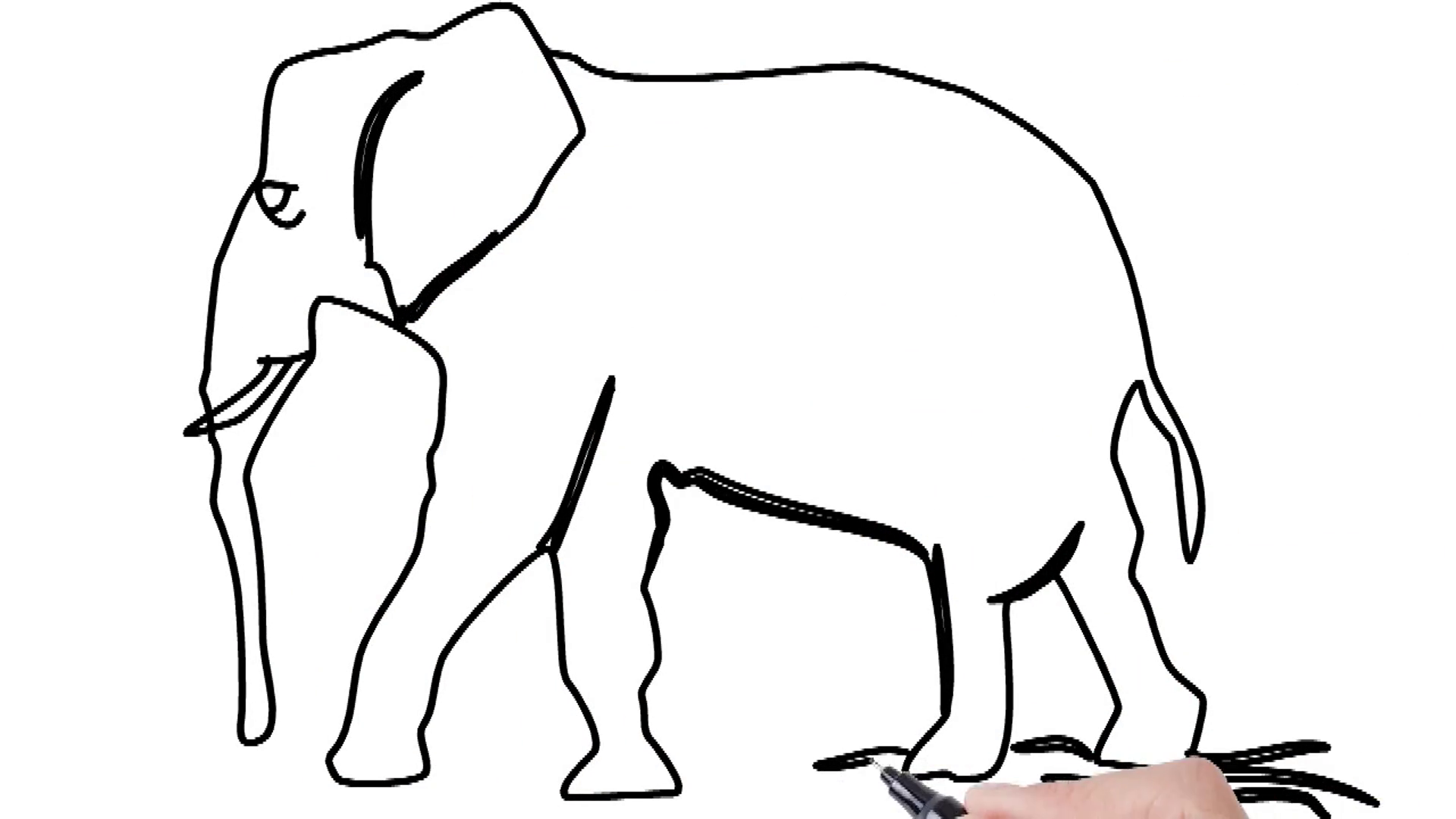 1920x1080 Man Sketching Elephant On Whiteboard Background Animated Sketch
