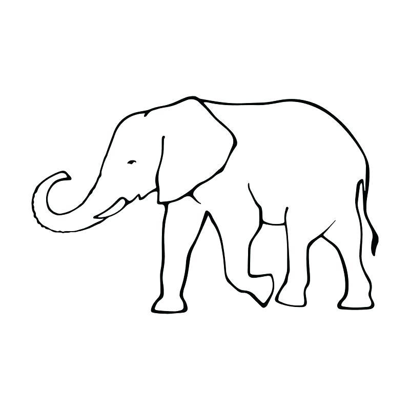 800x800 elephant outline elephant outline vector elephant tattoo outline