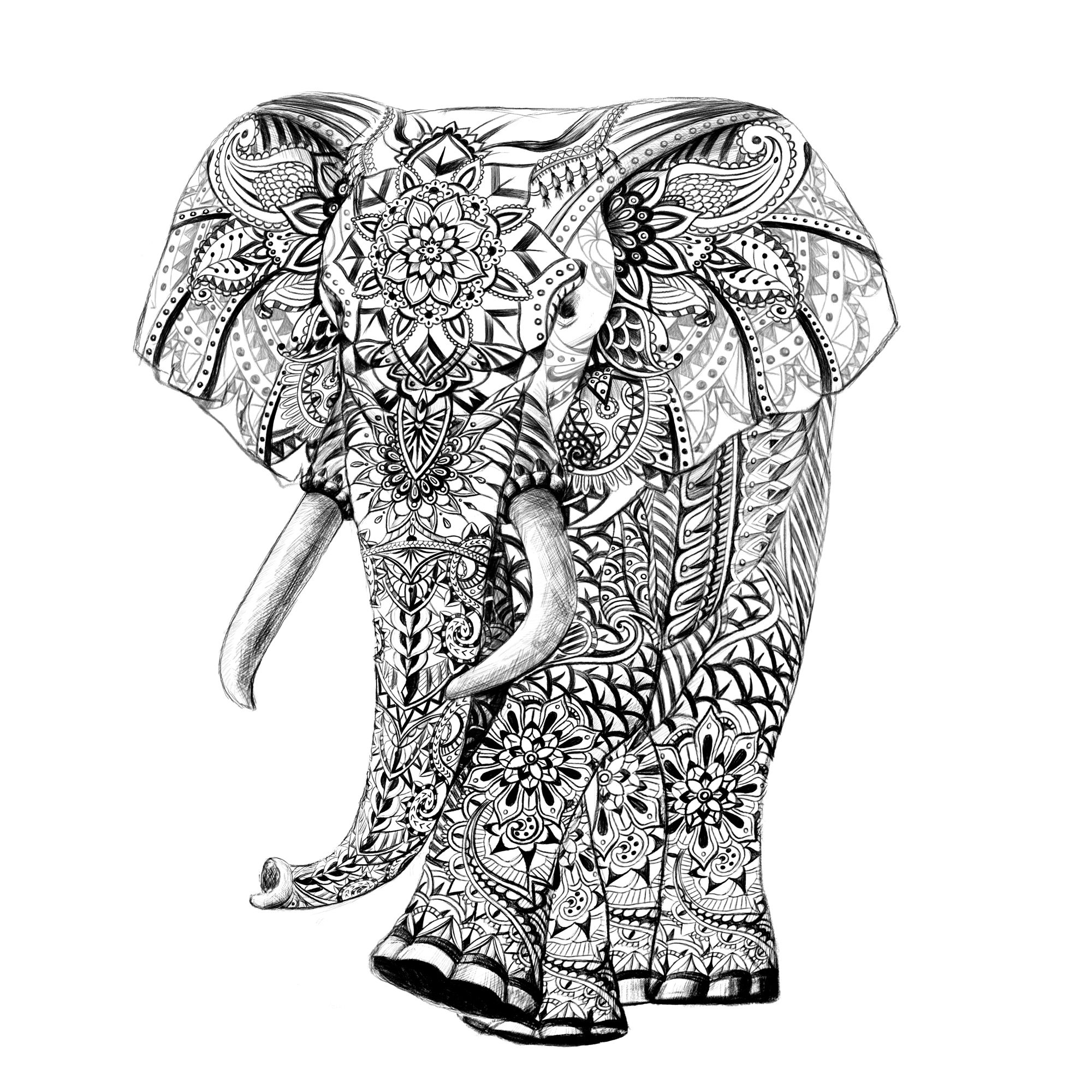 2000x2000 elephant drawing feminine for free download