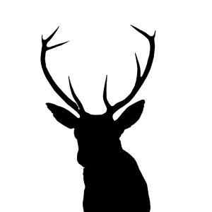 300x300 Deer Head Drawing