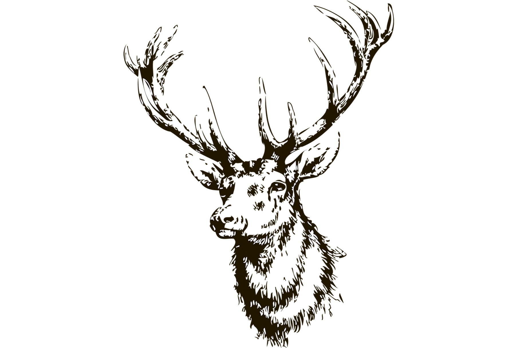 1820x1214 Elk Head Hand Drawn Vector