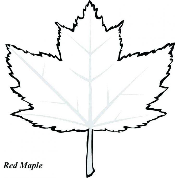 Elm Tree Drawing   Free download best Elm Tree Drawing on ...