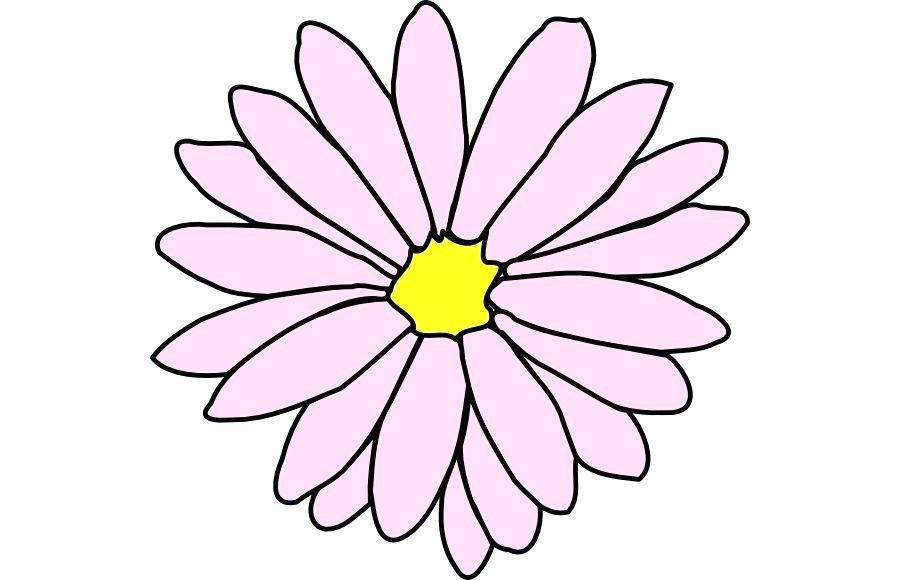 900x580 daisy drawing daisy ii daisy drawing simple