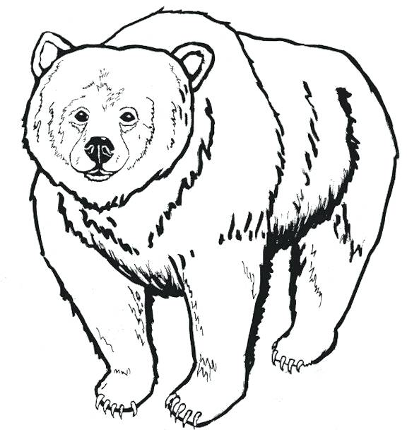 576x615 Coloring Teddy Bears Coloring Pages For Adults Emo Teddy Bear