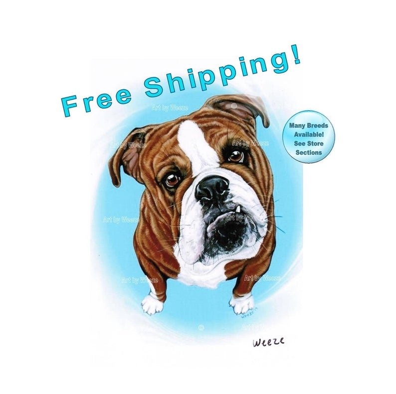 794x790 bulldog english bulldog bulldog art bulldog print bulldog etsy