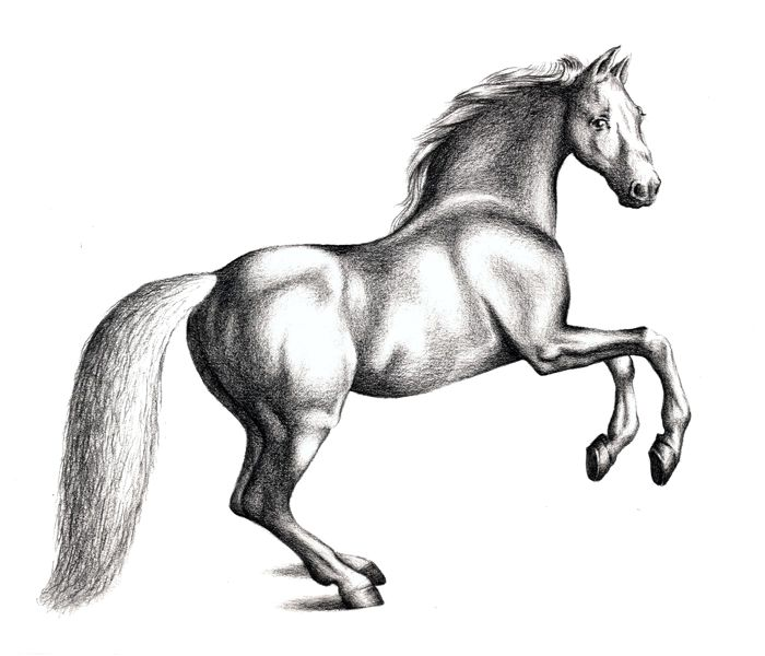 700x600 Tonal Drawing Horse For Free Download