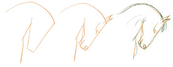 600x233 Drawing Horses, Draw A Horse's Face In Steps