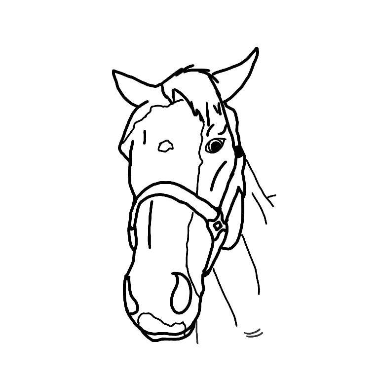 768x768 Drawing Requests Equestrian Amino