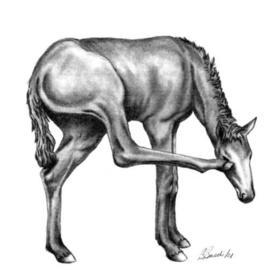 270x270 Equine Drawings Original Artwork For Sale