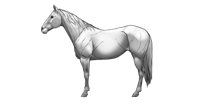 700x347 How To Draw Horses Step