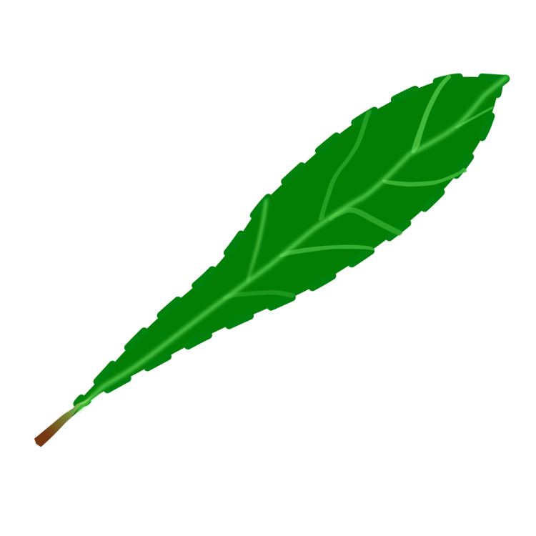 750x750 Drawing Leaf Transparent Png Clipart Free Download