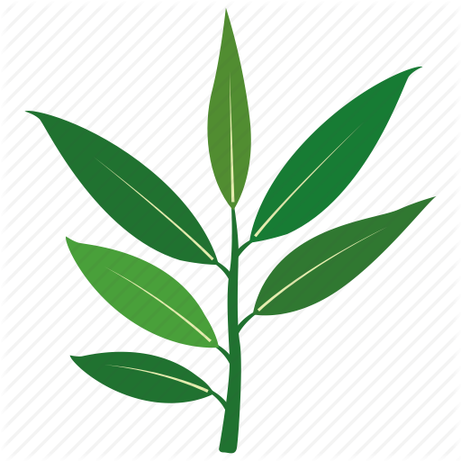 512x512 Eucalyptus Leaves Transparent Png Clipart Free Download