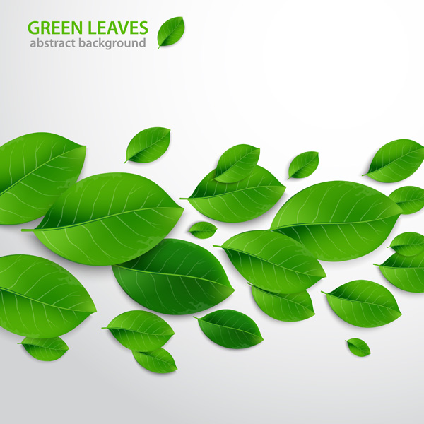 600x600 How To Create Realistic Vector Leaves In Illustrator