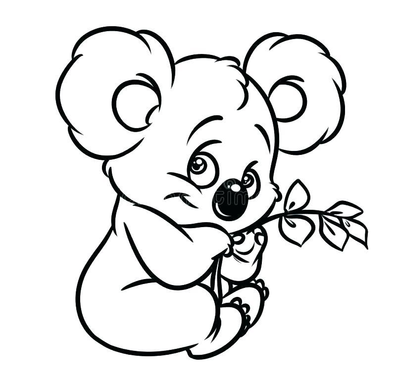 800x772 Koalas Coloring Pages Koala Bear