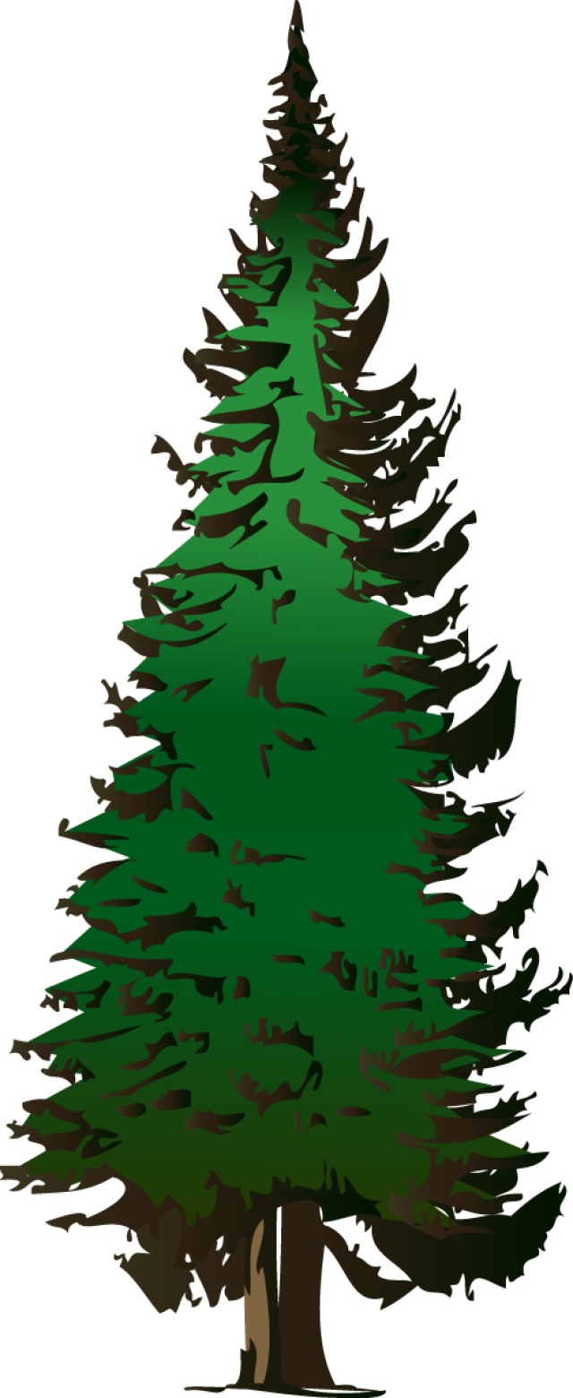 640x1560 Collection Of Free Drawing Tree Evergreen Download On Ui Ex
