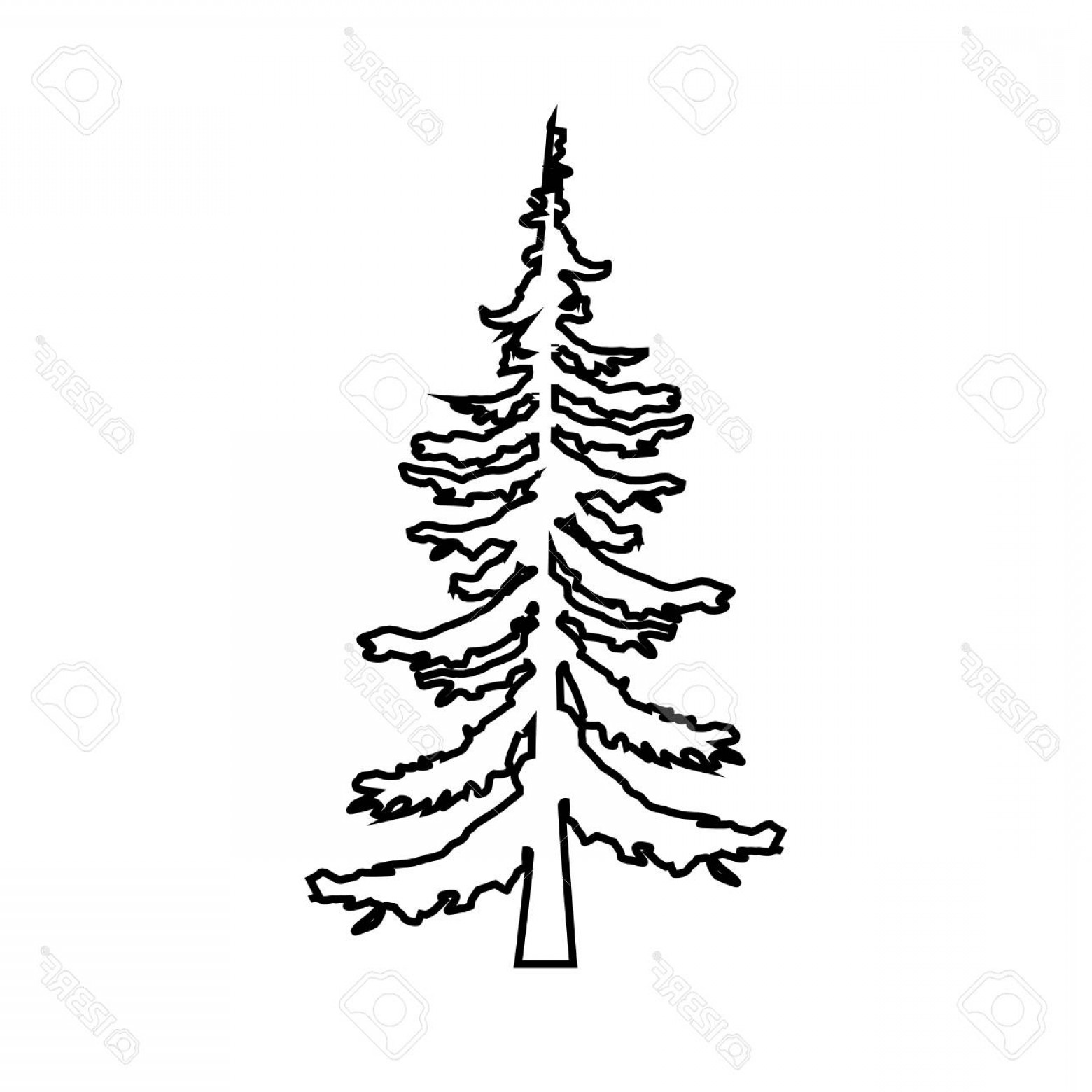 1560x1560 Evergreen Tree Outline Vector Soidergi